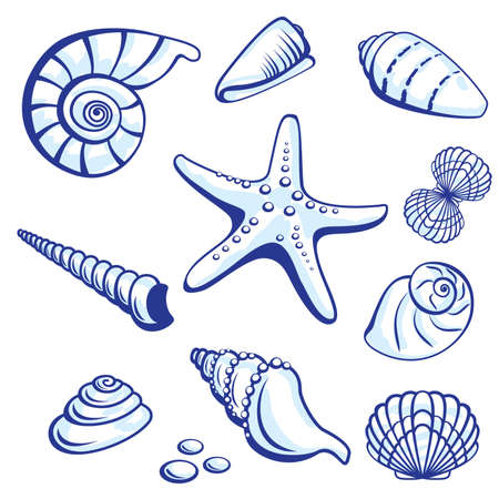 shell fish: Sea Set From Starfishes and Cockleshells. Vector illustration on white background.