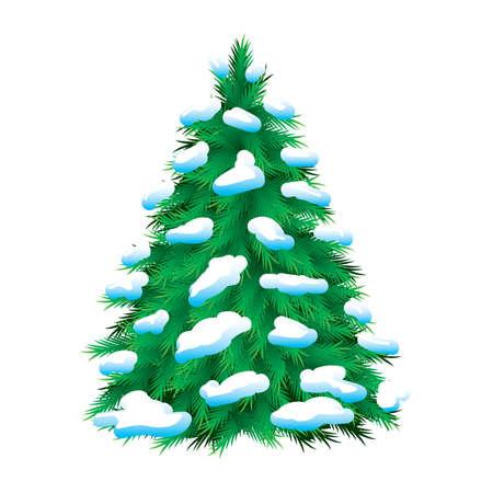 styczeń: Zielony choinkowe pokryte Å›niegiem, samodzielnie. Christmas obrazu