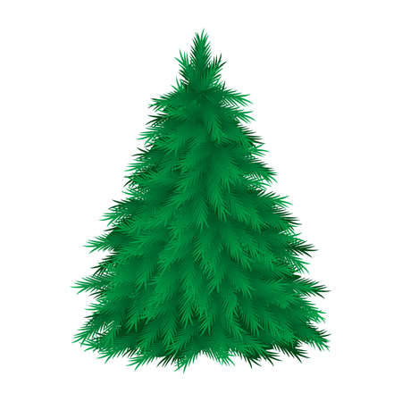 evergreen: Coniferous tree isolated. Vector illustration on white background Illustration