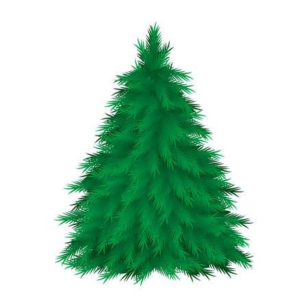 evergreen branch: �rbol con�fero aislado. Ilustraci�n vectorial sobre fondo blanco