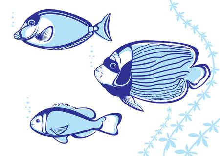 peces de agua salada: Peces tropicales. Ilustraci�n vectorial sobre fondo blanco para el dise�o