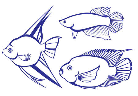 Tropical Fish. Set #3. Vector illustration on white background for design Vector