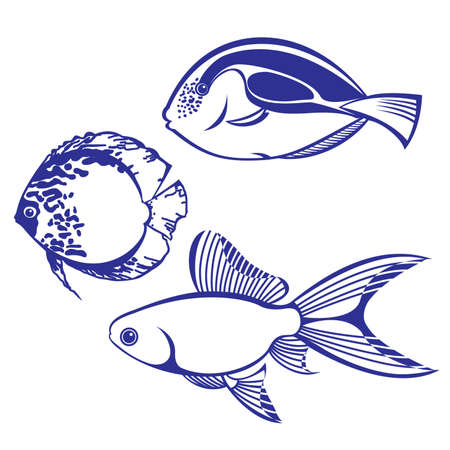 Tropical Fish. Set #4. Vector illustration on white background for design Stock Vector - 8984161