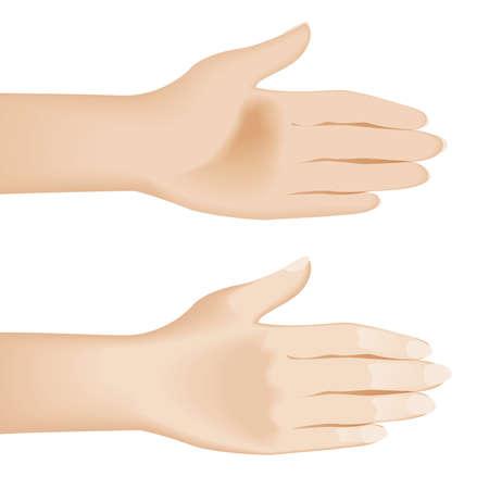 hold hand: Mani aperte isolate on white. Illustrazione su sfondo bianco
