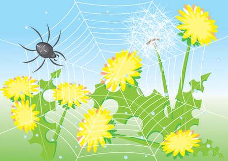 Cartoon spider and dandelions. Illustration for design Vector