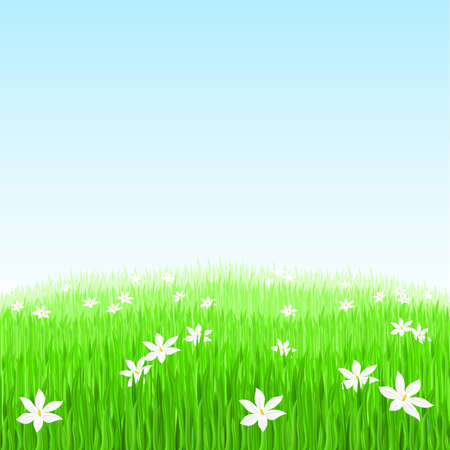 Illustration of Green grass with white flowers Stock Vector - 9231563