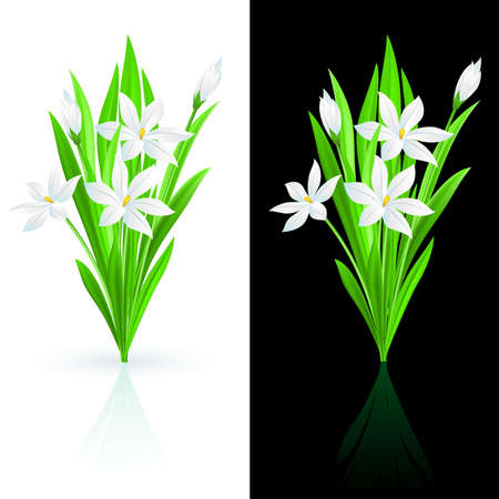 Spring flowers on white and black background. Vector