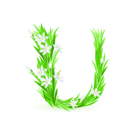 One letter of spring flowers alphabet - U. Illustration on white background Vector