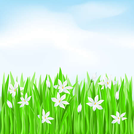 Green grass with white flowers. Spring Greeting Card Stock Vector - 9262150