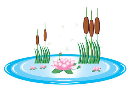 Pond with lily and water reeds. Illustration on white background