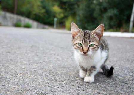 yeux tristes: Kitty peu avec des yeux tristes verts marcher dans la gare de triage