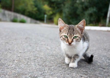 ojos tristes: Kitty poco con ojos verdes tristes caminando en el patio