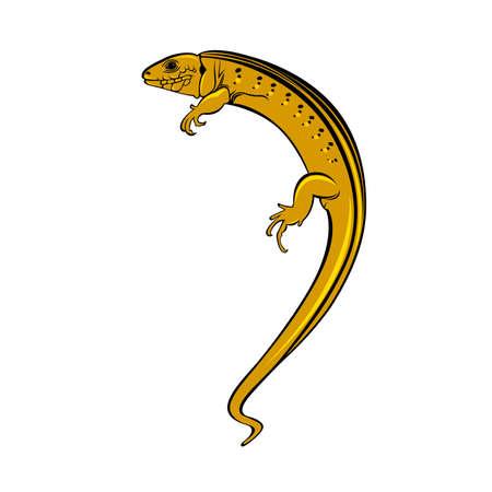leopard gecko: Lizard a gecko. Illustration on white background for design