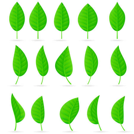 Various types and shapes of green leaves. Illustration on white background Stock Vector - 9546493