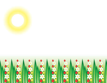 Flowering grass in the sun. Illustration on white background  Stock Vector - 9639347