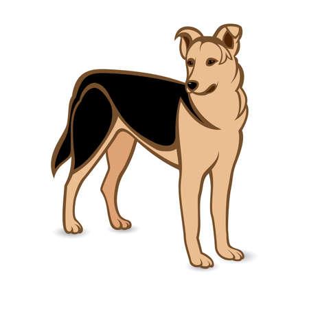 Realistic German Shepherd. Illustration on white background Vector