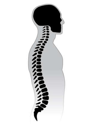 脊椎: 人間の背骨。黒と白のイラスト。