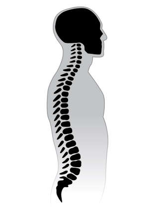 align: Human Spine. Black and white illustration. Illustration