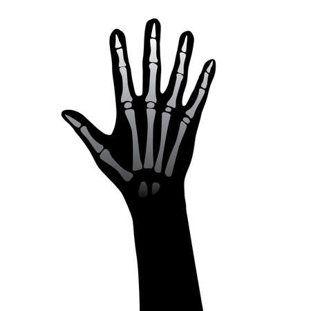 medico dibujo: Ilustraci�n de anatom�a de la mano abierta sobre fondo blanco Vectores
