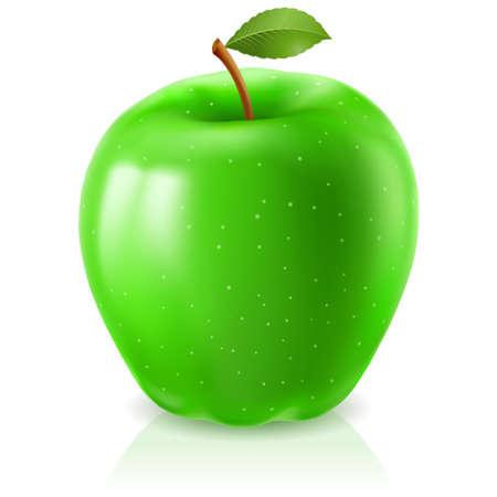 fruit stem: Green apple. Illustration on white background for design Illustration