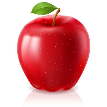 蘋果: 成熟的紅蘋果。在白色背景上的插圖