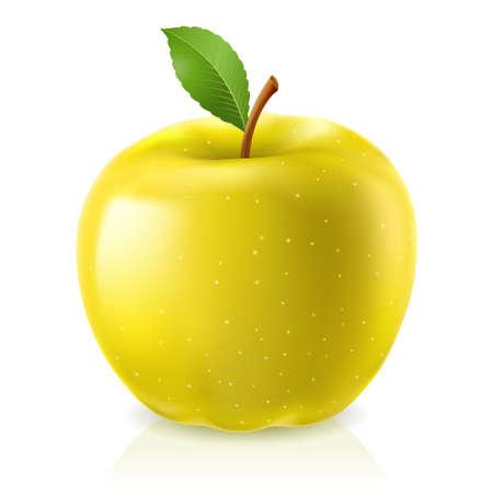 fruit stem: Yellow apple. Illustration on white background