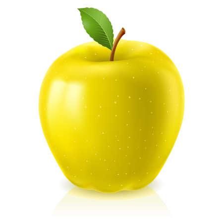 yellow  agriculture: Apple amarillo. Ilustraci�n sobre fondo blanco