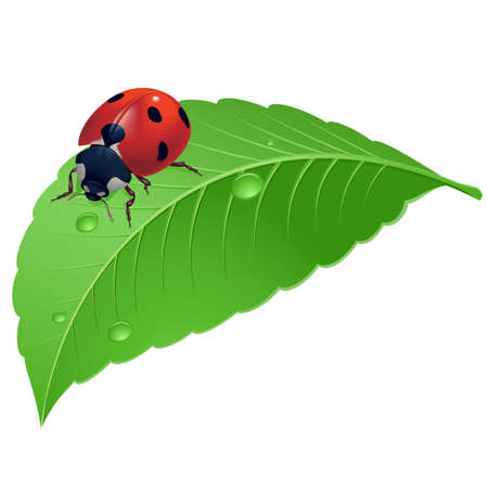 Ladybird sobre hierba con gotas de agua. Ilustración sobre fondo blanco.