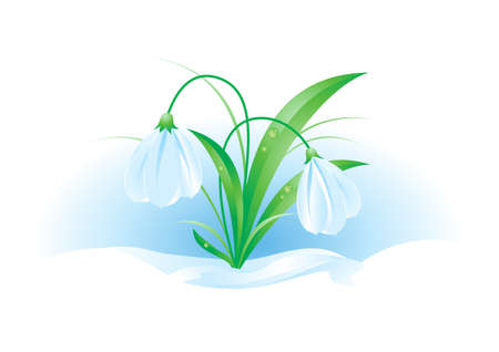 macro leaf: Illustration of snowdrops on white background for design