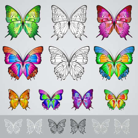 Set of different colored butterflies. Illustration on white background Vector