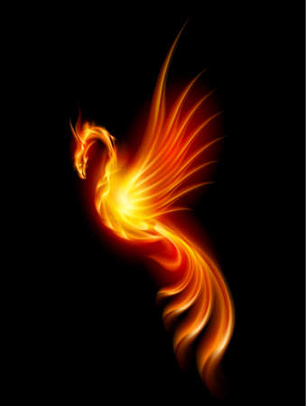night bird: Burning Phoenix. Illustration isolated over black background