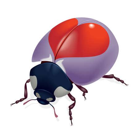 lady beetle: Ladybug with hearts. Illustration on white background  Stock Photo