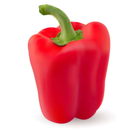 One Red pepper. Photo-realistic. Illustration on white background Vector