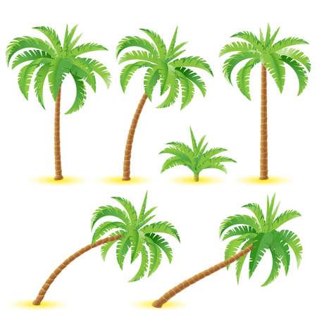 arbre     ? � feuillage persistant: Cocotiers. Illustration sur fond blanc pour la conception Illustration