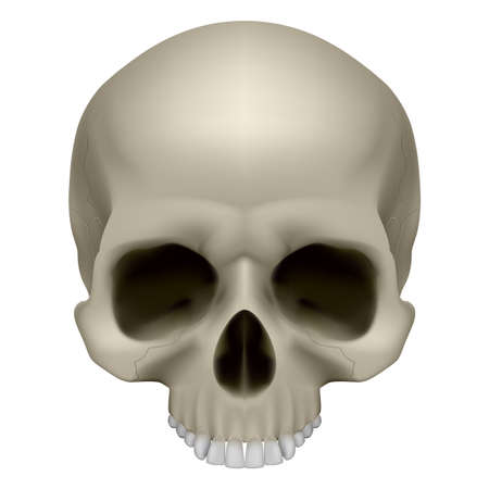 dead man: Human skull, front view. Digital illustration on white for design