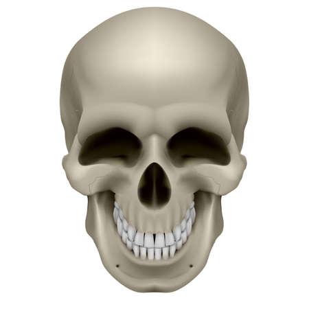 Freaky Human Skull. The emotion of joy. Illustration on white Stock Vector - 13329164