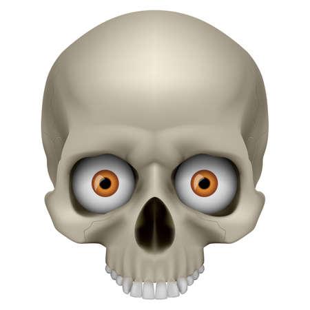 Freaky Human Skull. Illustration on white for design Stock Vector - 13329169