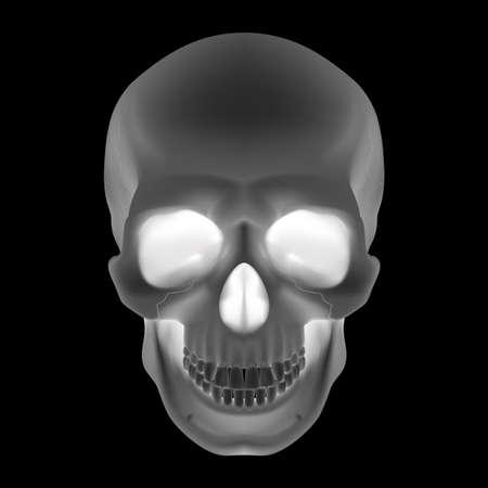 Human Skull. Black and White illustration for design Vector