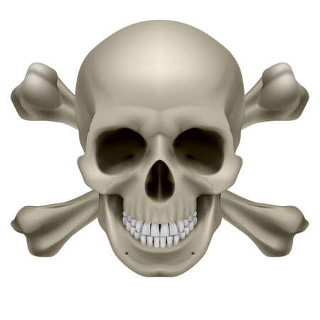 calavera pirata: Cr�neo, realista y los huesos. Ilustraci�n sobre fondo blanco Vectores