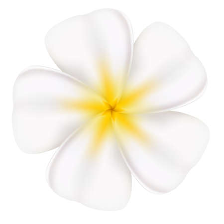 Realistic and beautiful frangipani. Illustration on white background Stock Vector - 13858309