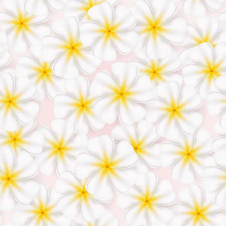 Seamless texture realistic and beautiful frangipani. Illustration on white background    Vector