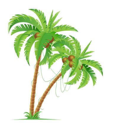 Twee palmbomen. Illustratie voor ontwerp op witte achtergrond
