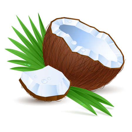 palm oil: Coconut. Illustration for design on white background
