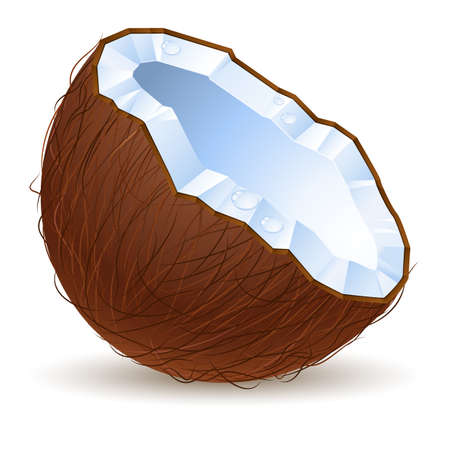 Half a coconut.  Illustration for design on white background Vector