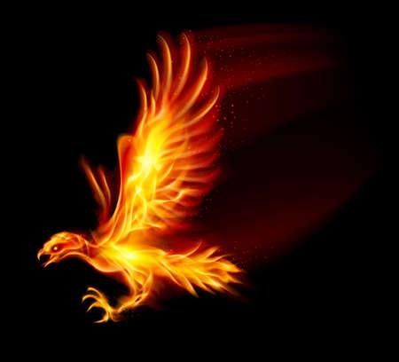 ave fenix: Flaming Hawk. Ilustración sobre fondo negro para el diseño