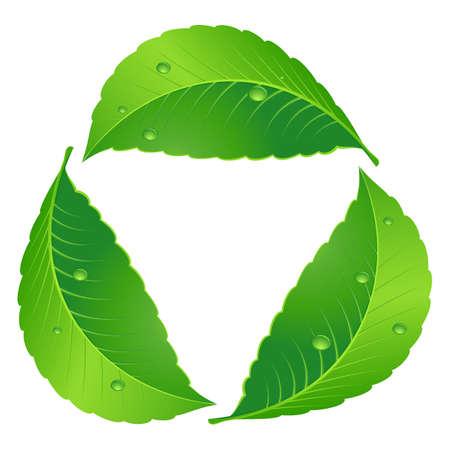 basura organica: Símbolo de reciclaje. Hoja concepto. Ilustración en blanco Vectores