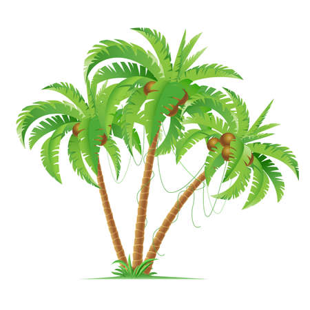 Three cartoon coconut palms. Illustration on white background