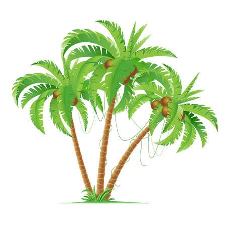 noix de coco: Trois cocotiers bande dessin�e. Illustration sur fond blanc