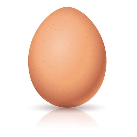 brown egg: Realistic egg. Illustration on white background for design