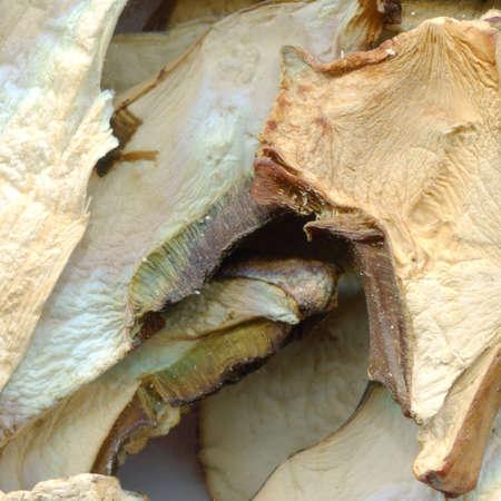 乾燥キノコ。クリエイティブなデザインの背景イラスト